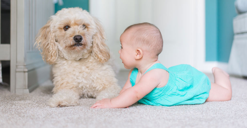 Is Your Carpet Cleaner Safe for Kids and Pets?